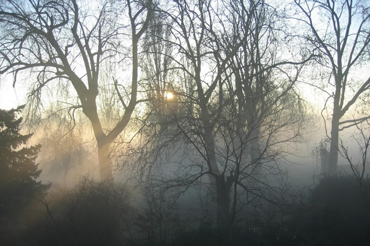 Brockwell Park in fog